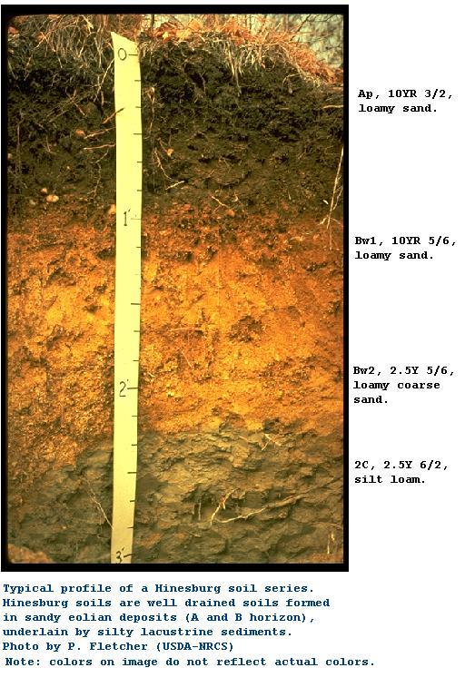 Hinesburg soil profile for Soil description