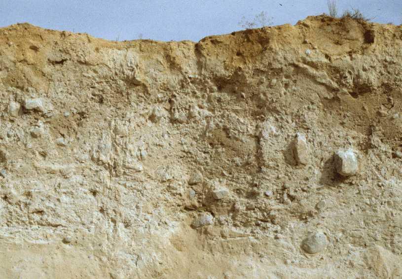 Lacustrine soil